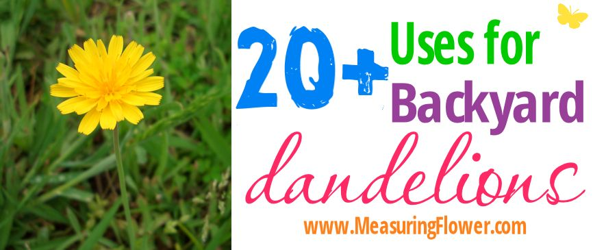 20+ Uses for Backyard Dandelions--MeasuringFlower.com
