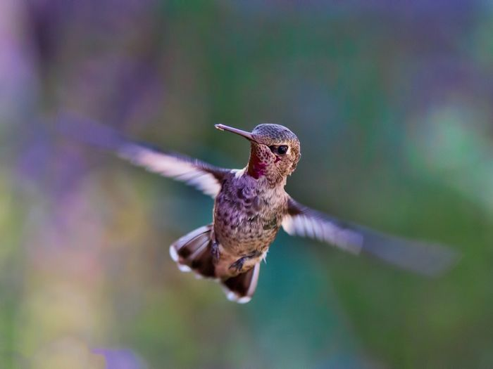 picture relating to Printable Hummingbird Nectar Recipe called Hummingbird Nectar