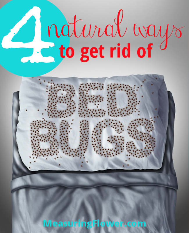 4-natural-ways-to-get-rid-of-bed-bugs